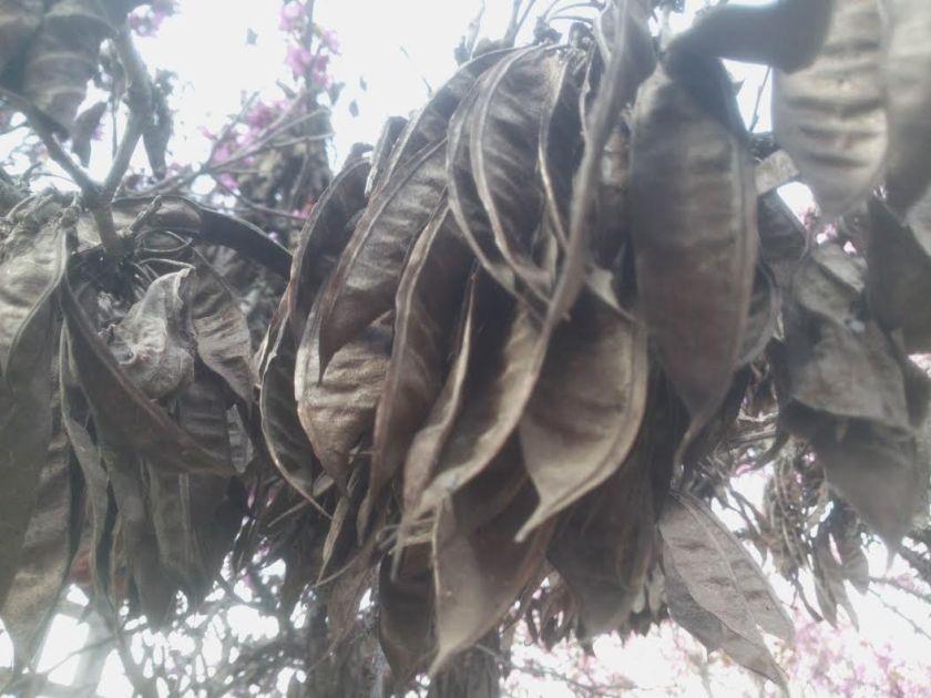 זרעים מאשתקד שהיו תלויים כל החורף