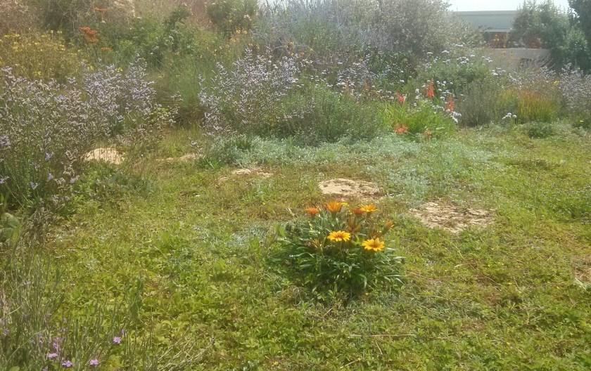 מבט כללי לתחליף המדשאה ולגינה