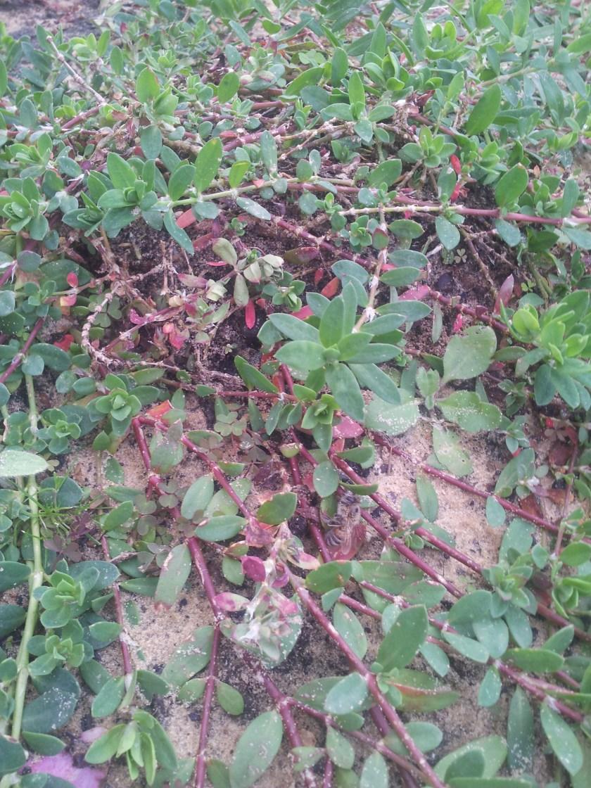מהבר אל הגינון - אלמוות הכסף משתרע בגינה