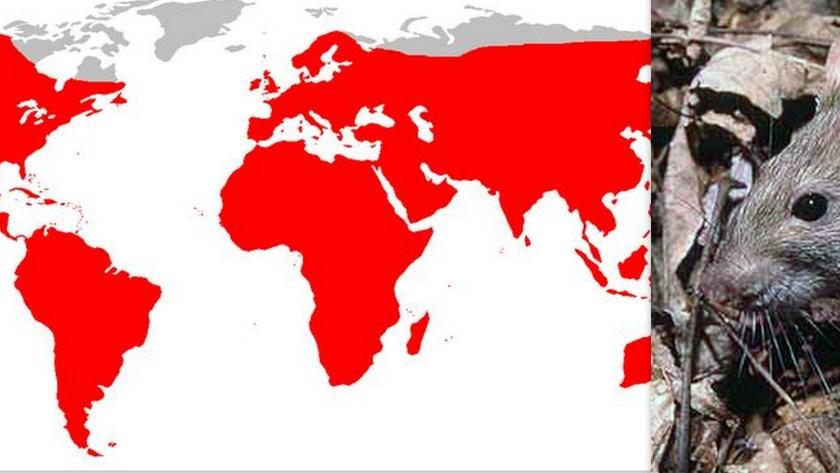 זה לא הקומוניזם שכבש את העולם. חולדת חוף ובני אדם בקשר אמיץ.