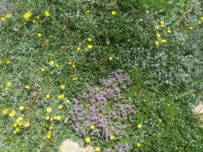 אין דבר כזה מדשאה טבעית אבל יש דבר כזה מדשאה הטרוגנית