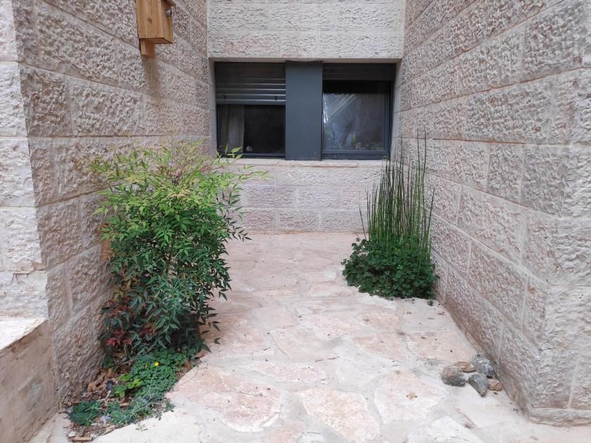 """בין שני חדרי הממ""""ד החדשים, שבטבט חורפי ומרסילאה גדולת רגל כלואות ללא יכולת התפשטות, יספקו פרטיות לחלונות מאחור"""