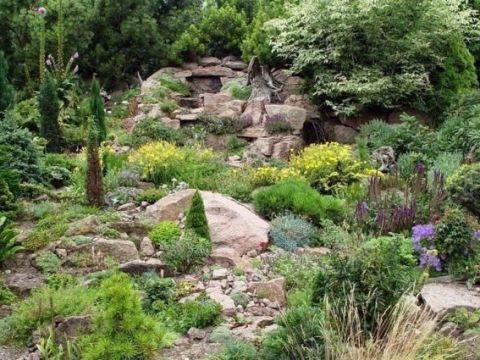 gartengestaltung pflegeleichte pflanzen pflegeleichte gärten: die wahl der richtigen pflanzen
