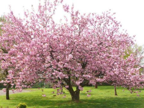 gartengestaltung obstbäume obstbäume richtig pflanzen - bauemotion.de