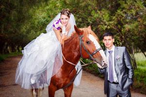 Hochzeit_mit_Tieren_Fotolia_50951068_XS