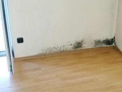Bausubstanz bedingter Schimmelbildung Mietminderung wegen Schimmelpilzen in der Wohnung