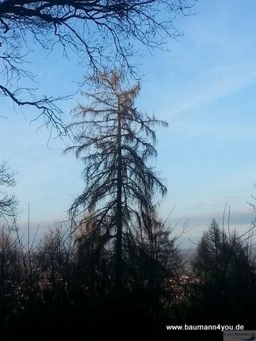 Rund um die Kippenburg - Baum