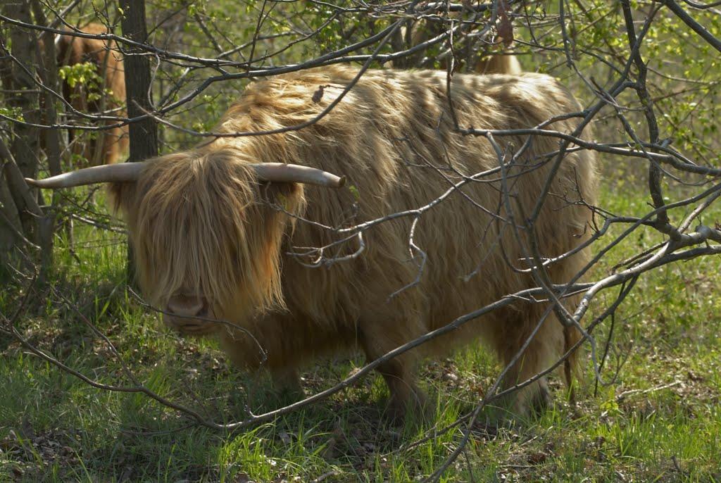 ein Tier mit einer seltenen graubraune (dun) Fellfärbung