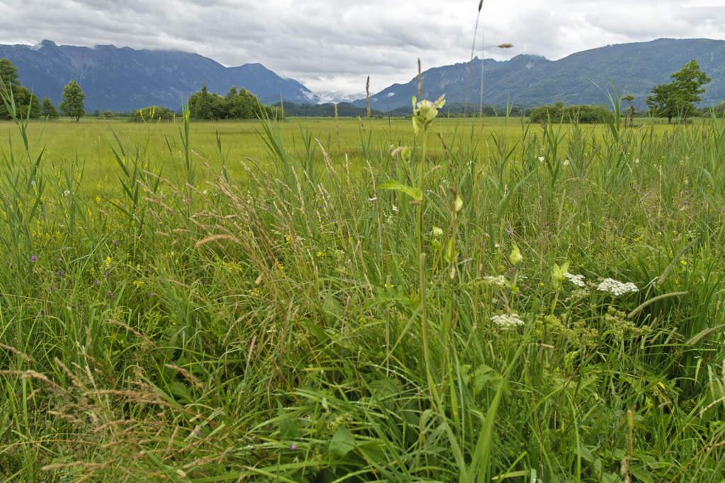Murnauer Moos, Blick über die Streuwiesen nach Süden Richtung Loisach-Tal