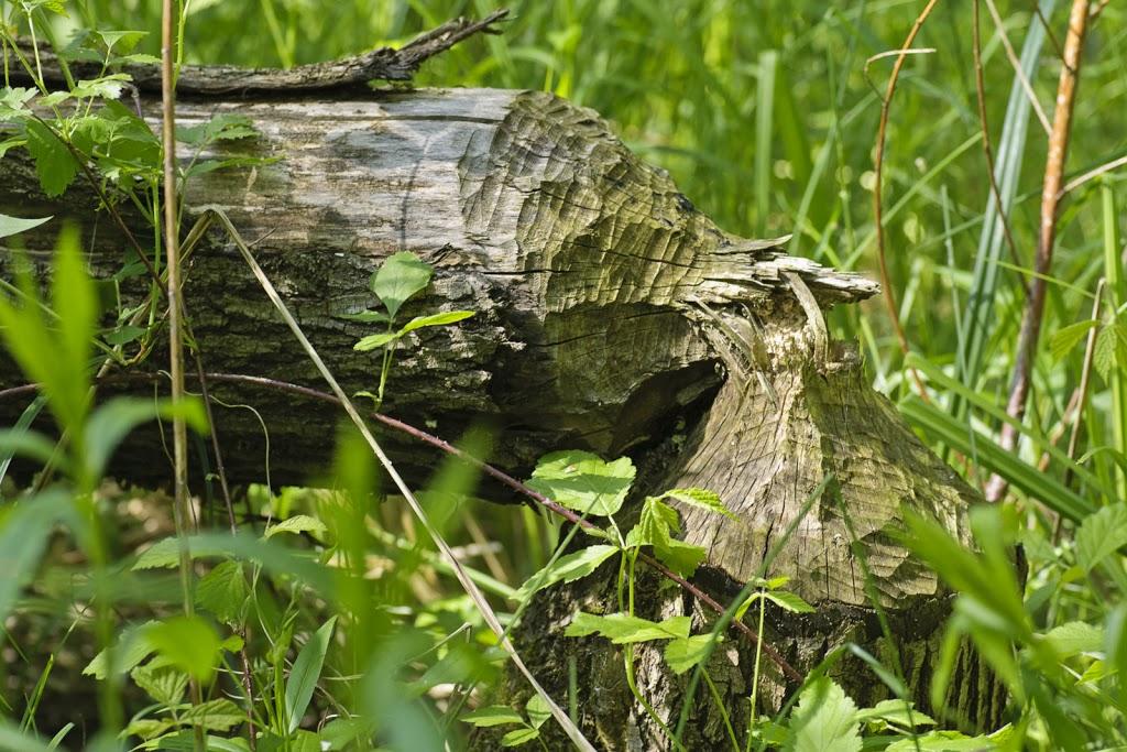 liegendes Totholz in Ufernähe
