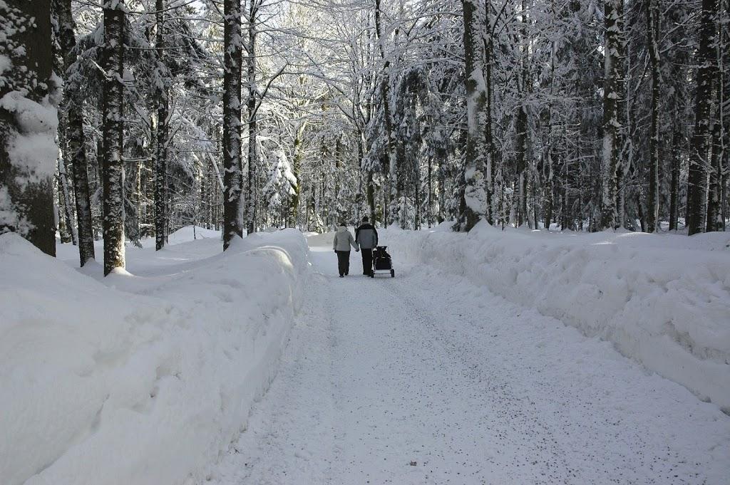 Winter im Tierfreigehege Nationalpark Bayerischer Wald
