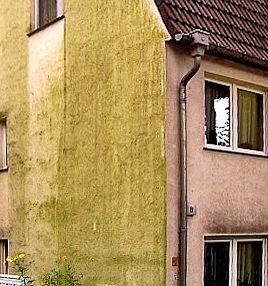 Algenbefall auf einer Hausfassade