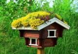 Vogelhaus mit Dachbegrünung