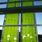 Fassadenmodule aus Glas die mit Algen gefüllt sind