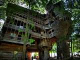 Baumhaus über 4 Etagen in einem riesengroßen Baum