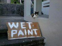 Katze liegt auf frisch gestrichener Mauer wet paint