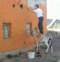 Maler steht auf Esel statt auf Leiter oder Gerüst