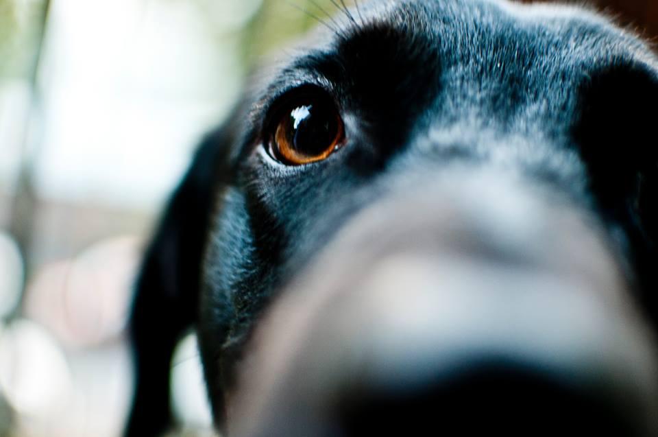 snoopy-bau-social-network-cani-trova-servizi