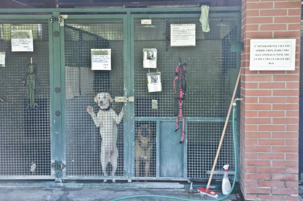 bausocial-cane-palermo-adozione-incentivo-cani-canili-480-euro