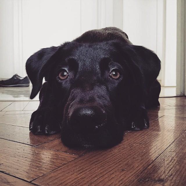 10 Motivi Per Non Adottare Un Cane Nero Bausocialit