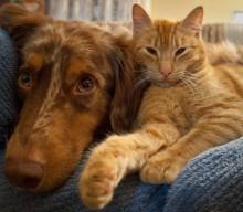 ANIMAL SOCIAL BONUS, quattro proposte della LAV al Governo