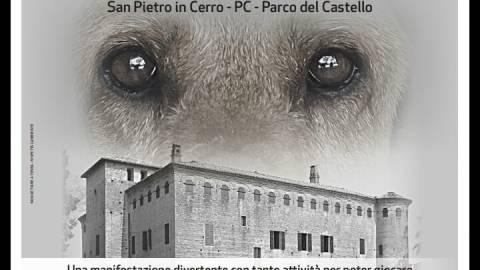 Un castello per tanti cani