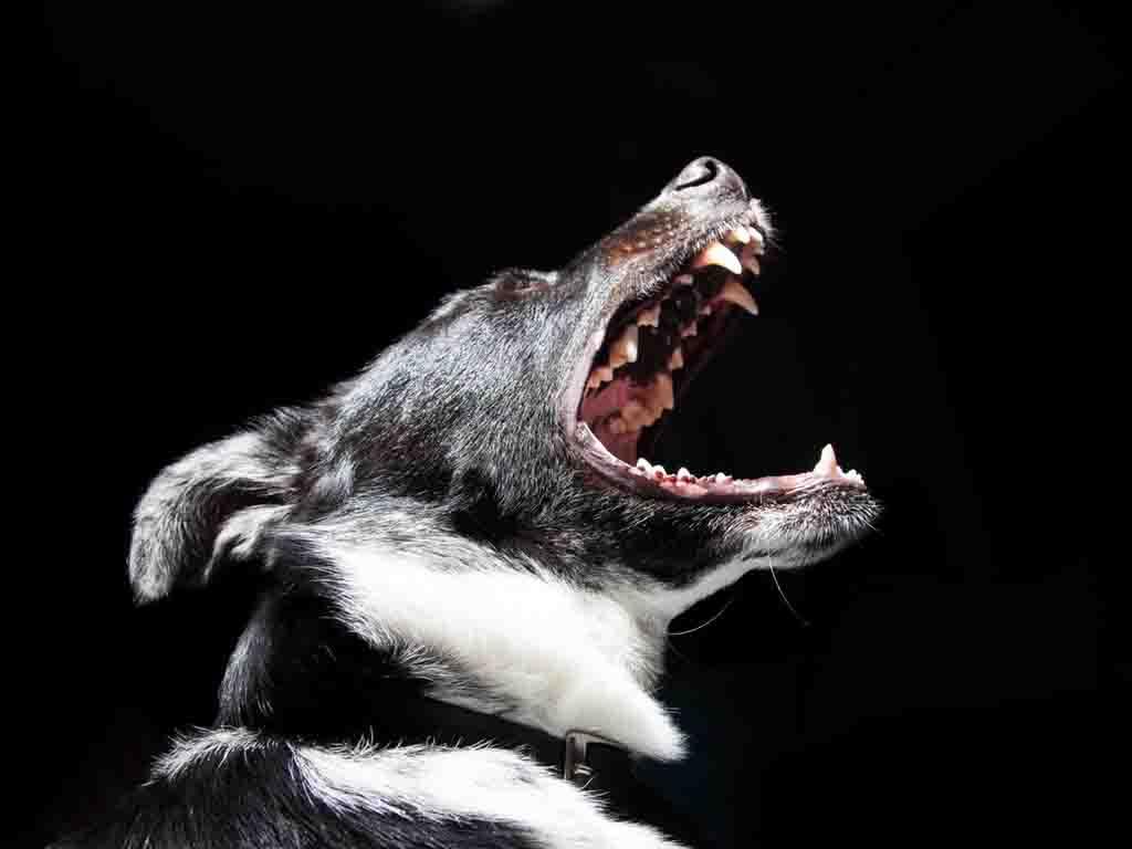 cane abbaia troppo