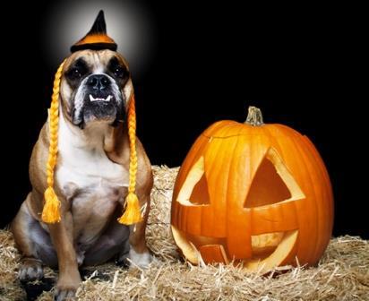 Halloween con il cane