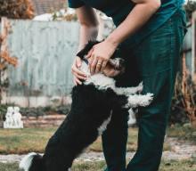 Corso patentino per cani a PESCARA