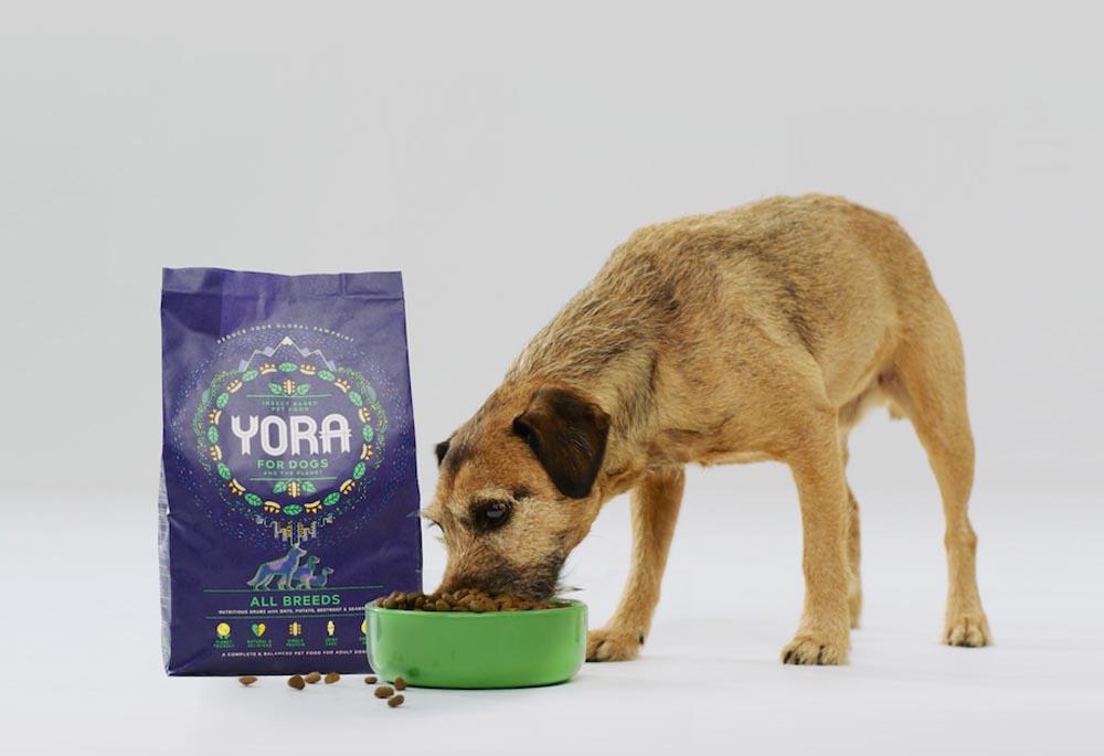 cibo per cani a base di insetti