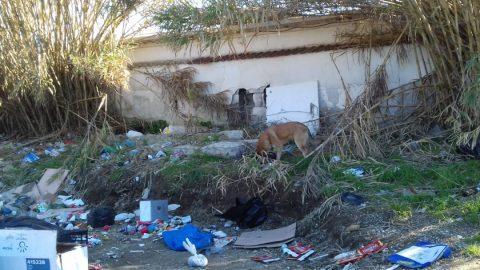 Save The Dogs randagismo Napoli