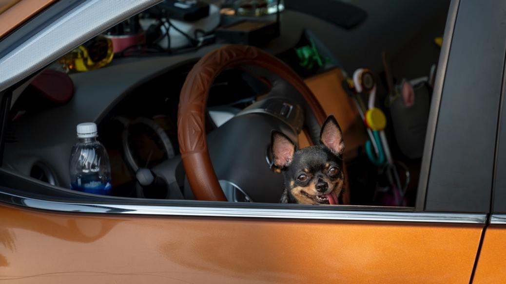 cane chiuso in auto al caldo