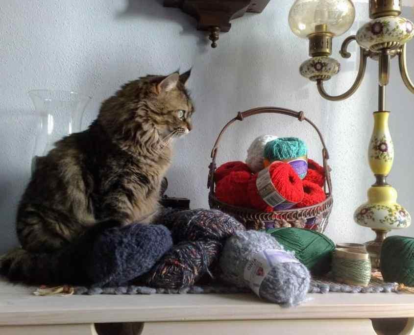 Foto Katze