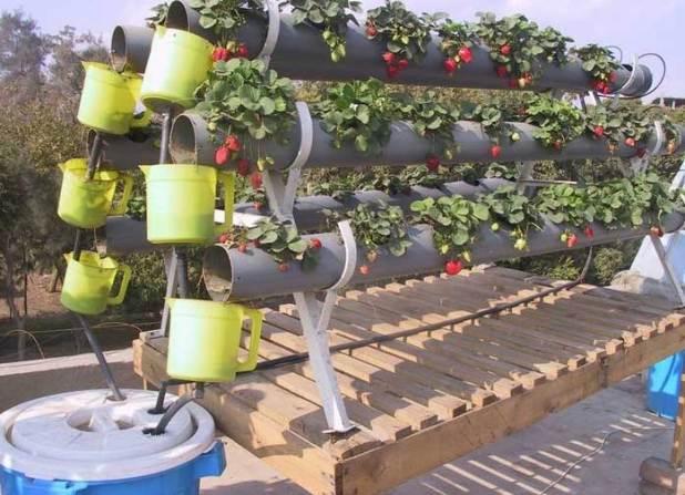 الزراعة المنزلية