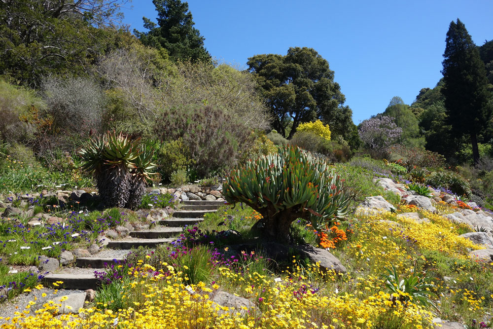 The 7 Best Bay Area Gardens For Romance And Relaxation