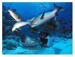 nase adventure diver certification bay area scuba rh bayareascuba com