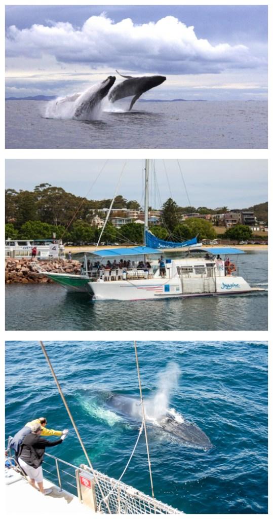 Imagine Whale Watching Port Stephens