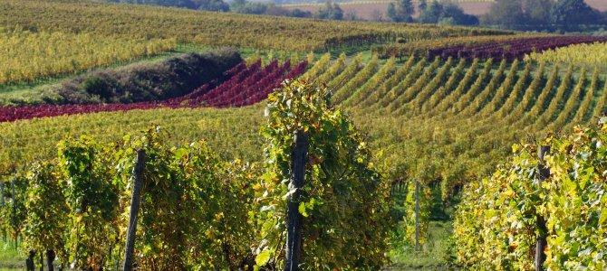 An der Badischen Weinstrasse und im Breisgau