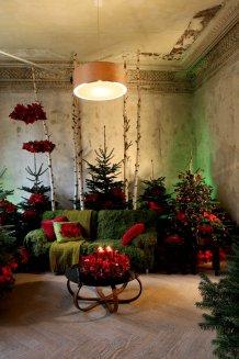 04 Waldspaziergang mit roten Weihnachtssternen