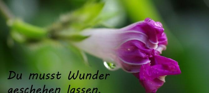 Wunder…