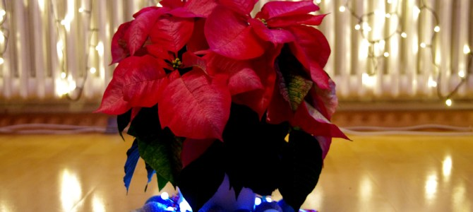 Skandinavisches Weihnachtsstern-Arrangement