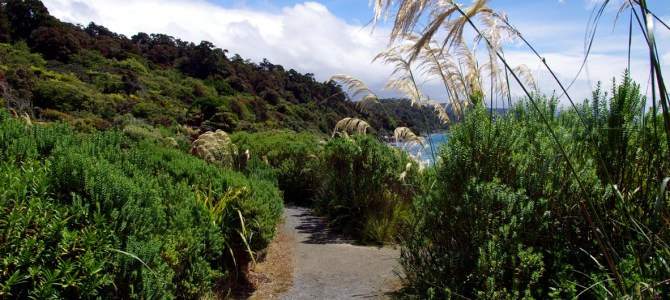 Neuseelands drittgrösste Insel: Stewart Island