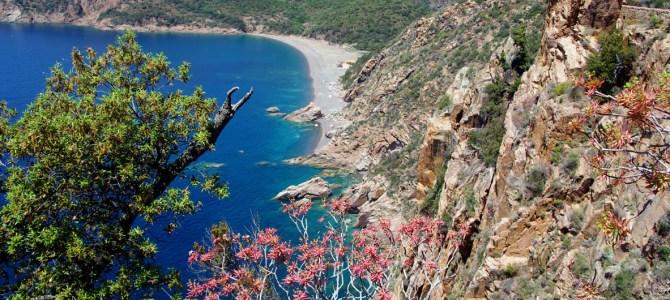 Korsikas Westküste entlang in den Süden