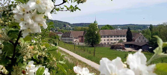 In der Schweiz unterwegs – Von der Werdinsel zum Kloster Fahr (Region Zürich)