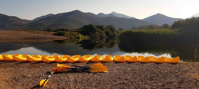 Paddelspass im Fangodelta auf Korsika: ein Schildkrötenparadies