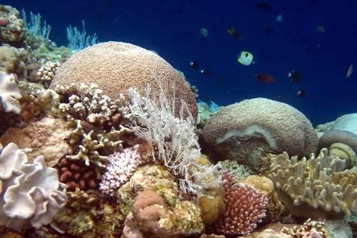 Korallenriff Fotoquelle: Jakarta Post