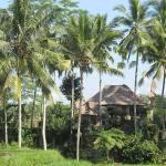 Bali will von Filmstar Julia Roberts profitieren