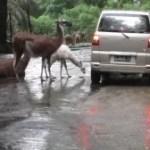 Unser Besuch im Safari Park