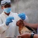 Vogelgripper erneut ausgebrochen