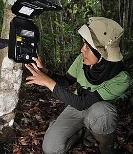 Mila bei der Arbeit. © Des Syafrizal / WWF  Fotoquelle: wwf.de